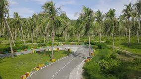 Widok z lotu ptaka furmani biegowego ślad wśród zielonych drzewek palmowych przy letnim dniem Trutnia widoku biegowy ślad dla kar zdjęcie wideo