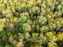 Widok z lotu ptaka gęsty las w jesieni fotografia royalty free