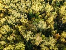 Widok z lotu ptaka gęsty las w jesieni obraz stock