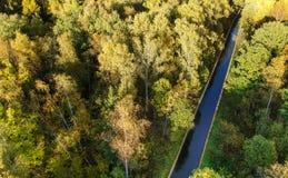 Widok z lotu ptaka gęsty las w jesieni zdjęcie stock