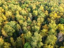 Widok z lotu ptaka gęsty las w jesieni zdjęcie royalty free