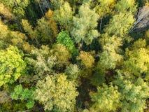 Widok z lotu ptaka gęsty las w jesieni obrazy stock