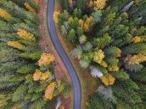 Widok z lotu ptaka gęsty las w jesieni z drogowym rozcięciem obrazy stock