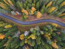 Widok z lotu ptaka gęsty las w jesieni z drogowym rozcięciem obraz royalty free