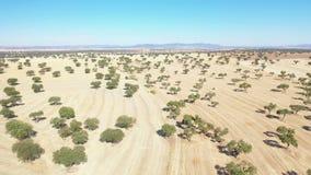 Widok z lotu ptaka i lądowanie na rolniczych polach obok Hinojosa Del Duque zbiory