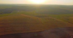 Widok z lotu ptaka idylliczny wiosna paśnik i kultywujący pola 4K zbiory wideo