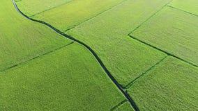 Widok Z Lotu Ptaka irlandczyka pole od Dongshan społeczności miejskiej, Yilan, Tajwan zbiory wideo