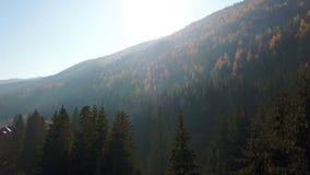 Widok z lotu ptaka jesień sosnowy las z koloru żółtego i zieleni drzewami w górach zbiory wideo