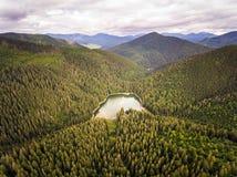 Widok z lotu ptaka Jeziorny Synevir w Karpackich górach w Ukraina Obraz Royalty Free