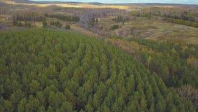 Widok z lotu ptaka kamera od zielonego lasu zwarci mieszani drzewni wierzchołki sosny i brzozy klamerka Powietrzny truteń strzela Zdjęcie Stock