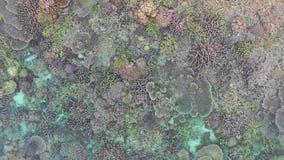Widok z lotu ptaka kolorowa rafa koralowa w Raja Ampat zbiory