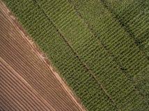 Widok z lotu ptaka kukurudzy ziarna narastająca przekątna nad zieleń obrazy stock