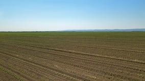 Widok z lotu ptaka kukurydzany pole odciski zielone young Kukurydzany widok z lotu ptaka Zdjęcie Stock