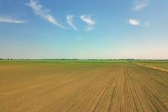 Widok z lotu ptaka kukurydzany pole odciski zielone young Kukurydzany widok z lotu ptaka Zdjęcia Stock