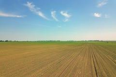 Widok z lotu ptaka kukurydzany pole odciski zielone young Kukurydzany widok z lotu ptaka Zdjęcie Royalty Free