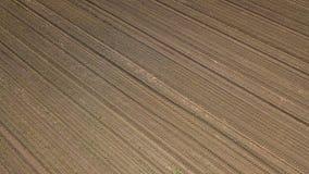 Widok z lotu ptaka kukurydzany pole Odgórnego widoku wiosny kukurydzany pole Zdjęcia Royalty Free