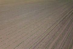 Widok z lotu ptaka kukurydzany pole Odgórnego widoku wiosny kukurydzany pole Fotografia Royalty Free