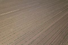 Widok z lotu ptaka kukurydzany pole Odgórnego widoku wiosny kukurydzany pole Obrazy Stock