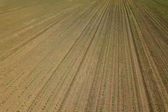 Widok z lotu ptaka kukurydzany pole Odgórnego widoku wiosny kukurydzany pole Zdjęcie Stock