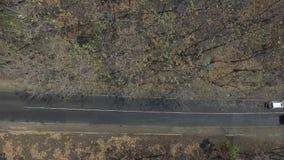 Widok z lotu ptaka las zbiory wideo