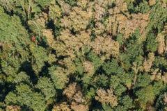 Widok z lotu ptaka las zdjęcie stock