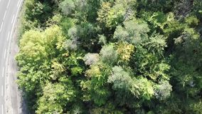 Widok z lotu ptaka las i ścieżka w Pyrenean, Francja zdjęcie wideo