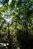 Widok z lotu ptaka las, tekstura las w widok z lotu ptaka, Tajlandia Obrazy Stock