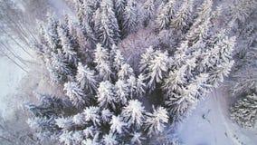 Widok z lotu ptaka las w śniegu zbiory wideo