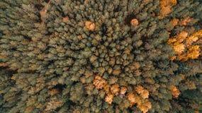 Widok z lotu ptaka las w jesieni fotografia royalty free