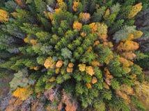 Widok z lotu ptaka las w jesieni zdjęcie royalty free