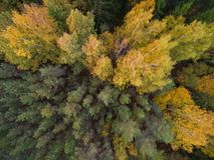 Widok z lotu ptaka las w jesieni fotografia stock