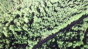 Widok z lotu ptaka las w Pyrenean, Francja zbiory wideo