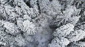 Widok z lotu ptaka las w zima chmurnym dniu Piękna zimy natura świerczyna i sosna w śniegu Latać nad zbiory