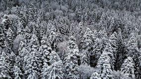 Widok z lotu ptaka las w zima chmurnym dniu Piękna zimy natura świerczyna i sosna w śniegu Latać nad zdjęcie wideo