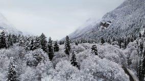 Widok z lotu ptaka las w zima chmurnym dniu Piękna zimy natura świerczyna i sosna w śniegu Niski lot zbiory wideo