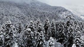 Widok z lotu ptaka las w zima chmurnym dniu Piękna zimy natura świerczyna i sosna w śniegu Niski lot zdjęcie wideo
