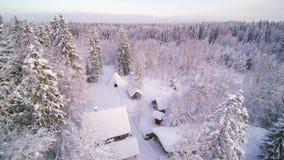 Widok z lotu ptaka las zakrywający w śniegu zbiory wideo