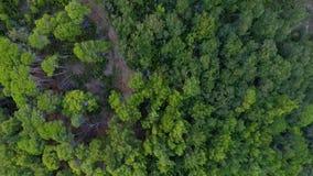 Widok Z Lotu Ptaka: Latać nad lasem zbiory