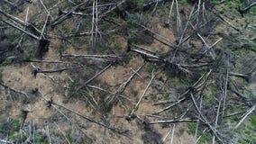 Widok z lotu ptaka lata nad zniszczonym rżniętym lasem zdjęcie wideo