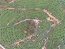 Widok z lotu ptaka lokalizować w Kuala krai olej palmowy plantacja, Kelantan, Malaysia, wschodni Asia Obraz Stock