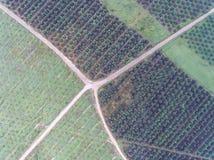 Widok z lotu ptaka lokalizować w Kuala krai olej palmowy plantacja, Kelantan, Malaysia, wschodni Asia Zdjęcia Royalty Free