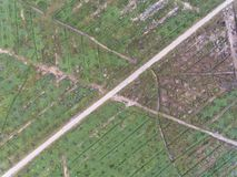 Widok z lotu ptaka lokalizować w Kuala krai olej palmowy plantacja, Kelantan, Malaysia, wschodni Asia Fotografia Stock