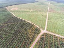Widok z lotu ptaka lokalizować w Kuala krai olej palmowy plantacja, Kelantan, Malaysia, wschodni Asia Obrazy Stock