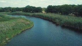 Widok Z Lotu Ptaka: Lot nad Pi?knym rzeki i zieleni drewnem zbiory wideo