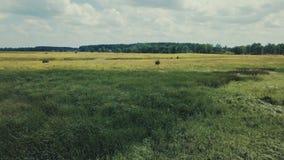 Widok Z Lotu Ptaka: Lot nad Pi?knym rzeki i zieleni drewnem zbiory