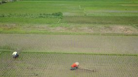 Widok z lotu ptaka materiał filmowy ryż rolnicy i pole zbiory wideo