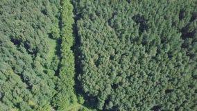Widok z lotu ptaka miasteczko blisko lasowej klamerki Widok z lotu ptaka miasteczko w obszarze zalesionym Lasowa droga prowadzi Zdjęcia Royalty Free