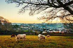 Widok z lotu ptaka miasteczko Cashel w Irlandia przy zmierzchem Obrazy Royalty Free