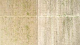 Widok z lotu ptaka nad polem uprawa, przedwczesność zdjęcia stock