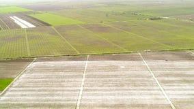 Widok z lotu ptaka nad polem uprawa, przedwczesność obrazy royalty free